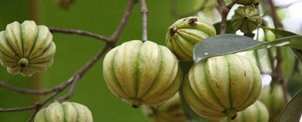 Why Choose Garcinia Cambogia?